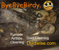 Bye Bye Birdy in the furnace with Ductwise Duct Cleaning.png